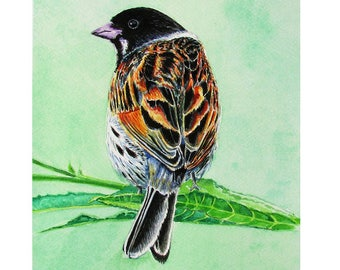 A4 Giclée Print entitled 'Reed Bunting' from an original watercolour painting by artist Martin Romanovsky