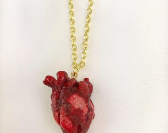 Anatomical realistic heart