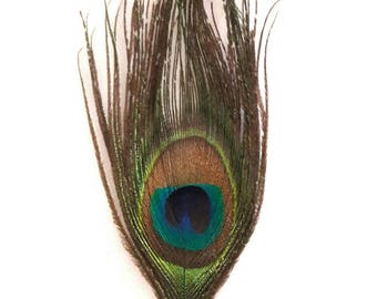 1 feather natural Peacock shimmering colors + - 11 x 5 cm