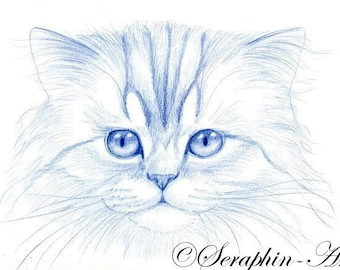 Blue Kitten Original Pencil Drawing