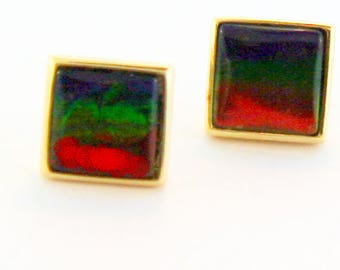 Pair of  Square  Cut Canadian Ammolite set in 14k Yellow Gold