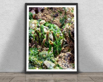 Low Tide Print, Nature Photography, Printable Large Poster,  Instant Digital Download