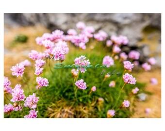 Flowers of the Burren, Clare.