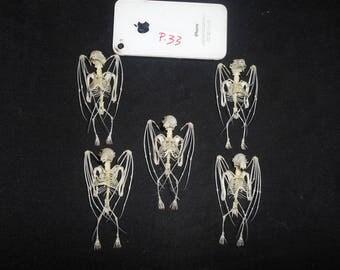 Taxidermy Fruit Bat Splaea Skeleton 5 Pcs