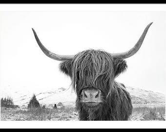 Highland Cow Print  / Scottish Highland Cow / Highland Cow in Winter  / Highland Cow black and white print / Large Wall Art Print /