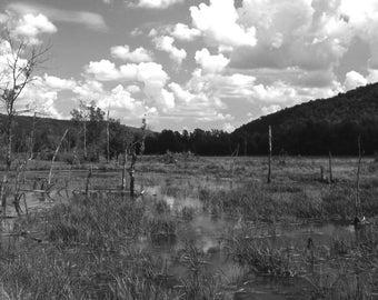 swamp1-OEM