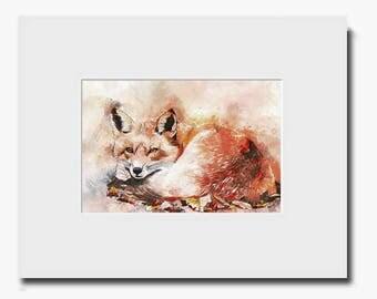 Fox Nap Fine Art Print