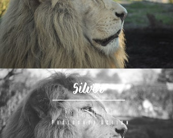 Silver - Photoshop Action