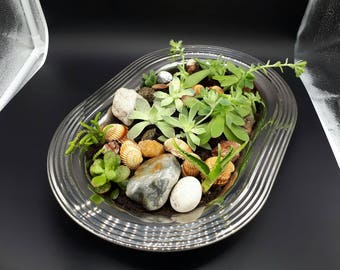 Tray with garden of rock, shells and succulents