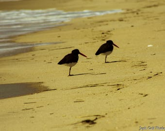 Two Birds on the Beach