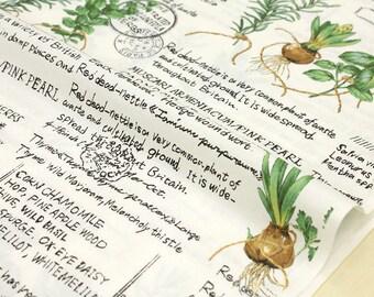 Japanese Fabric Yuwa Suzuko Koseki Herbs - green - 50cm