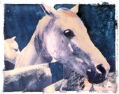 reserved for ALICE Photography White Horse in Barnyard Transfer Fine Art Photograph Card