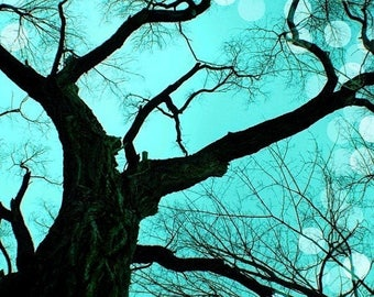 40% OFF SALE Teal Photo Nature Decor Tree Photograph Surreal Winter Picture Black Tree Photo 8x10 inch Fine Art Photography Print  An Evenin