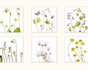 Wildflower Botanical Print Set, Six Wild Flower Prints, Scanned Flowers, Ferns, Buttercups, Xray Prints