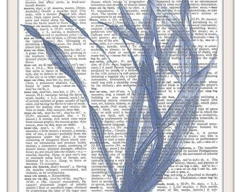 Blue Sea Kelp Nautical- Seaweed Vintage Dictionary Art Print-Fits 8x10 Mat or Frame