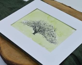 Oak Tree Drawing Watercolor Painting Savannah Candler Oak in Moss Green