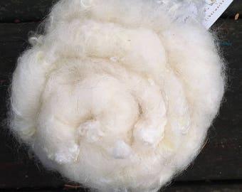 Snowball - Curly Locks