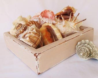 Painted Wood Box Tray Distressed Paint Coral Pink Wooden Seashell Display Beach Cottage Shells Decor Farmhouse Container Storage Farm House