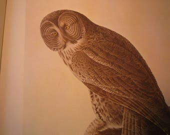 Vintage - Great Grey Owl - Audubon Color Plate oversized- - gift for birders - nature lovers framable bird print