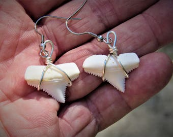 Great White Earrings - shark tooth , Authentic