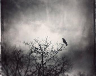 The Messenger - gothic crow photo PRINT, ethereal home decor moody dark art, dramatic spiritual tree bird mystical raven spirit animal totem