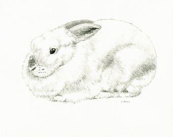 8 x 10 American Sable Rabbit Original Hand Drawn Sketch