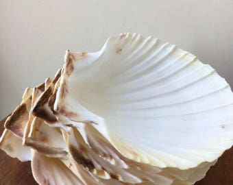 Shell big large coquille st jacques nautica theme ocean beach supply crafts art Shell Giant water Nautic Sea Breeze Art