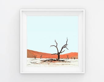 Deadvlei XIIII Desert Tree Photography Print