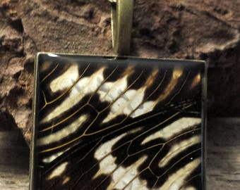 PhbeaD- Large Square Pendant with REAL CICADA WINGS: entomology jewelry, real insect jewelry, real wing jewelry, real butterfly wings