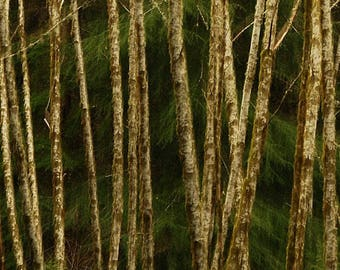 Abstract autumn photo, home decor, wall decor, nature photography, fine art, landscape, Botanical art, forest art