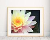 Waterlily Photography, Lotus Print, Tropical Flower Photo, Water Lily Print, Flower Decor, Gardening Gift, Waterlily Print, Botanical Art