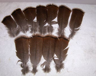 11 Wild Turkey Feathers 6 - 8 inches in length w/quills Home Decor Primitive Crafts