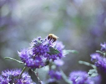 Fine art photograph of a bee - print
