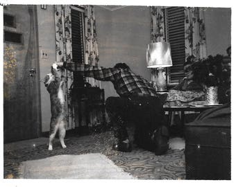"Vintage Snapshot ""Cool Cat"" Tabby Cat Stands On Hind Legs For Cat Treat Faceless Man Black & White Polaroid Found Vernacular Photo"