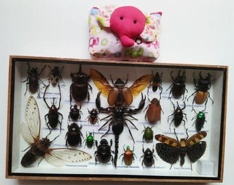 Real Rare Insect Insects Bug Bugs Art Framed Display Box Centipede Tarantura Spider Beetle Cicada Scorpion Entomology Taxidermy Gift