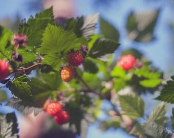 Gooseberries - Art Print