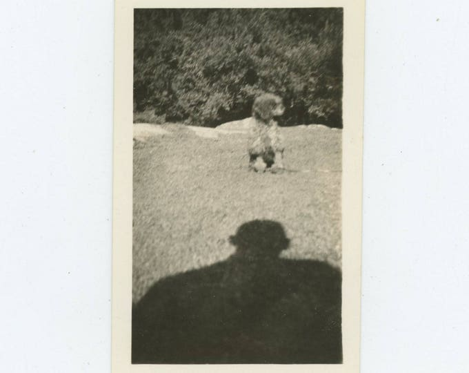 Vintage Snapshot Photo: Dog & Shadow [82654]