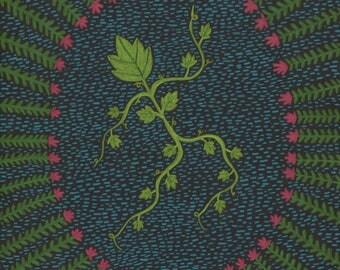 Cissos the Ivy