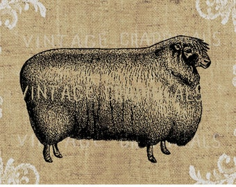 Vintage black sheep printable graphic Digital download image for decoupage papercraft pillows burlap cards iron on fabric transfer No. 1025