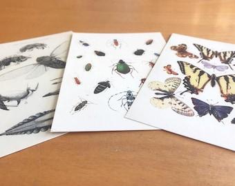 Vintage Scientific Illustration Postcards  Entomology - SET OF 3 - beetles (coleoptera), butterflies / moths, cicadas. Insect Art