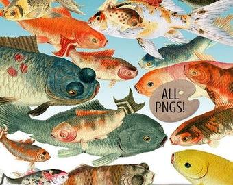 SALE: Clipart - Koi Fish Digital Images - Goldfish & Koi Clip Art - Digital Scrapbooking Koi Digital Images - Instant Download - Fish Clipar