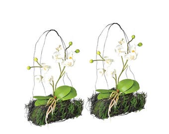 Set of 2 delicate hanging orchid arrangement