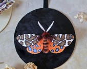 RESERVED: Jessica / Faux Taxidermy / Paper Taxidermy / Moth Art / Moth Faux Taxidermy / Paper Wall Art / Moth Wall Art / Fake Taxidermy