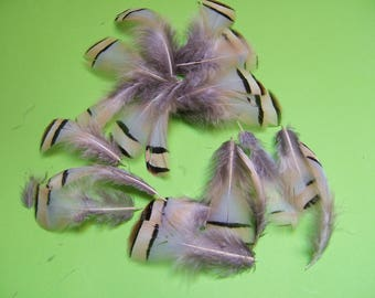 10 CHUKKARS feathers natural 5-8 cm height