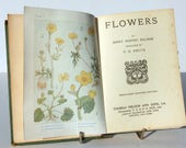 Antique Flower Book Vintage Rare Attractive colour illustration childrens Gardening Guide