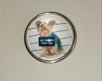 Guilty dog snap button