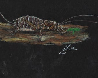 Weta Colored Pencil Drawing Print