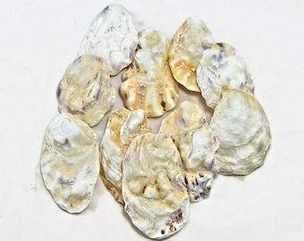 Oyster shells, 10 medium white shells. Seashells, seashell supply, craft shells, wedding decor, beach decoration, natural shells ,DIY shell