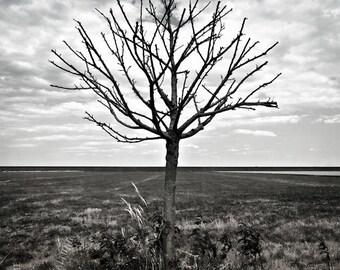 o.T. (landscape #16)
