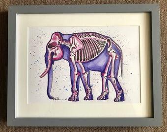 Elphant skeleton